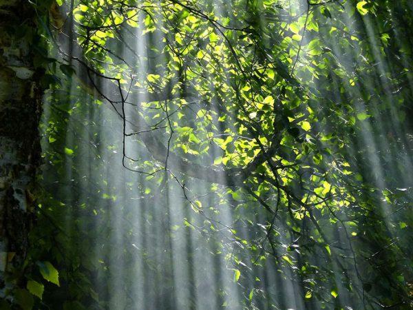 Fototapete mit Waldmotiv